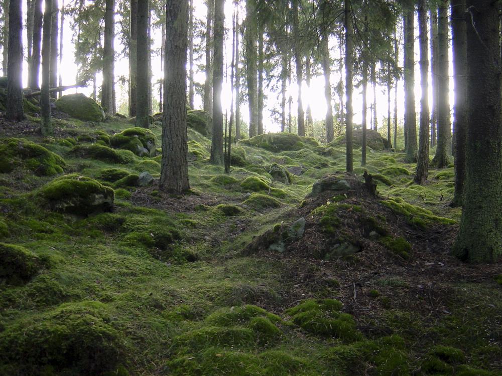 Skogen i Ellanda